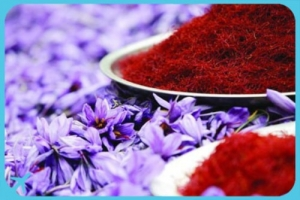 Mashhad's Saffron